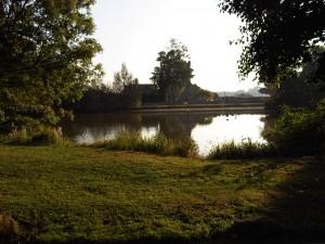Falmer pond