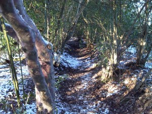 The magical Magical Path: So good I ran it twice